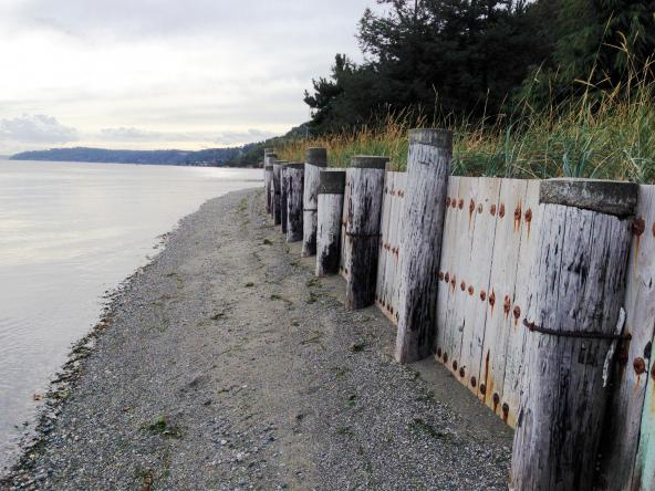 The neighbor's bulkhead confines the beach to a narrow strip of gravel, similar to Pat Collier's beach before bulkhead removal. Photo: Christopher Dunagan/Puget Sound Institute